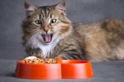 Ką reikia žinoti renkant sausą maistą katėms?